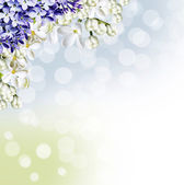 Beautiful and delicate pattern of white lilac — Stock Photo