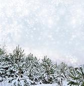 Winter landscape. Background. — Stock Photo