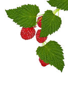 Ripe raspberries isolated on white background cutout — Stock Photo