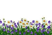 Veld madeliefjebloemen en klokken geïsoleerd op witte achtergrond — Stockfoto