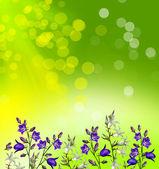 Sfondo floreale di campanule fiori — Foto Stock
