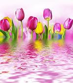 Bloemen tulpen — Stockfoto