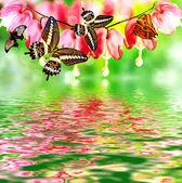 Pink bleeding heart flower — Stock Photo