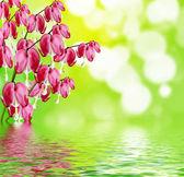 Kalbi kanayan pembe çiçek — Stok fotoğraf