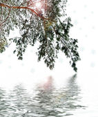 Winter forest — Стоковое фото