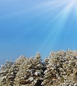 Winterwald. — Stockfoto