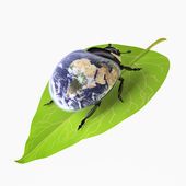Beetle (Environmental Conservation concept) — Stock Photo