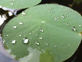 Water drops on a leaf — Stock Photo