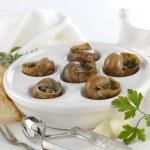 Burgundy snails — Stock Photo #13178550