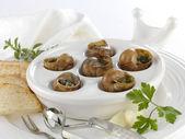 Burgundy snails — Stock Photo