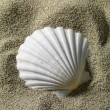 Shell — Stock Photo #14661449