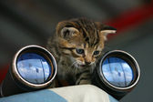 Kitten-Watcher — Stock Photo