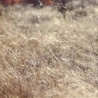 Beautiful abstract texture of dry grass — Stock Video #48928059
