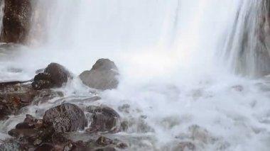 Orman şelale — Stok video