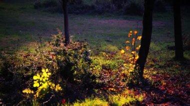 Paysages de la forêt enchantée — Vidéo
