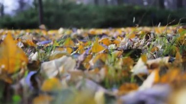 Fallen leaves — Stock Video