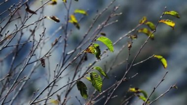 Leaves — Stock Video