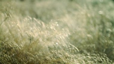 Beautiful abstract texture of dry grass — Stock Video