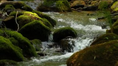 Water running over mossy rocks — Stockvideo