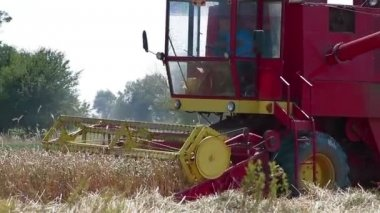 Combine harvester in field of wheat — Stock Video