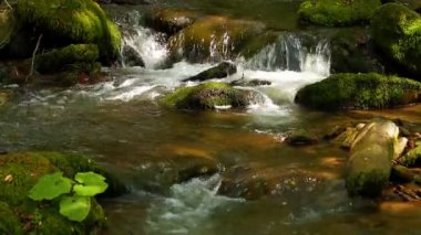Water running over mossy rocks — Wideo stockowe