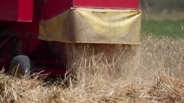 Combine releasing hay during wheat harvest — Stock Video