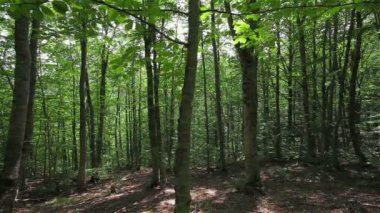 Thick deciduous forest — Stock Video