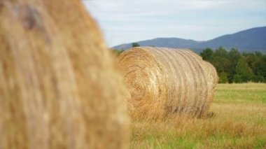 Hay bales in a meadow. — Stock Video