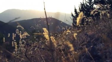 Summer magical mountain with wildflowers — Vídeo de Stock