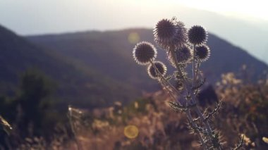 Magical scenery with wildflower — Vídeo de Stock