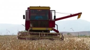 Combine machine harvesting ripe wheat — Stock Video