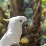 Parrot — Stock Photo #32489625