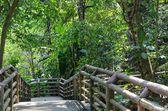 Wood bridge — Stock Photo