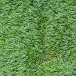 The lawn grass — Stock Photo
