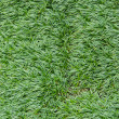 Stock Photo: The lawn grass