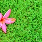 Lawn — Stock Photo #32606983