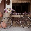 Bicycle and flowers. — Stock Photo #32736771