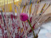 莲花和香. — 图库照片