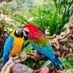 Parrot — Stock Photo #36017665