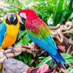 Parrot — Stock Photo #36480307