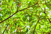 Green tree — Zdjęcie stockowe