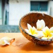 Tropical flower and coconut — Stock Photo