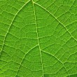 The structure of the leaf — Stock Photo