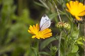 Fjäril på en blomma — Stockfoto
