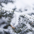 Fir-tree in snow — Stock Photo