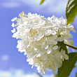 Stock Photo: White flowers