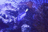 Fishes in an aquarium — Stock Photo