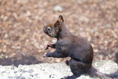 Little squirrel — Foto Stock