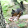 Little squirrel — Stock Photo #50615429
