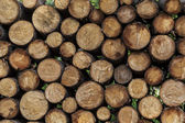 Woodpile ready for winter fires — Stock Photo